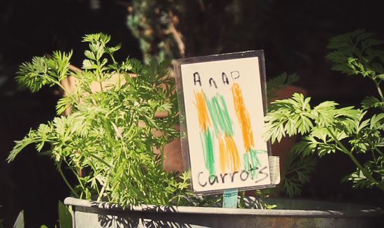 Carrots for Parsley Rabbit