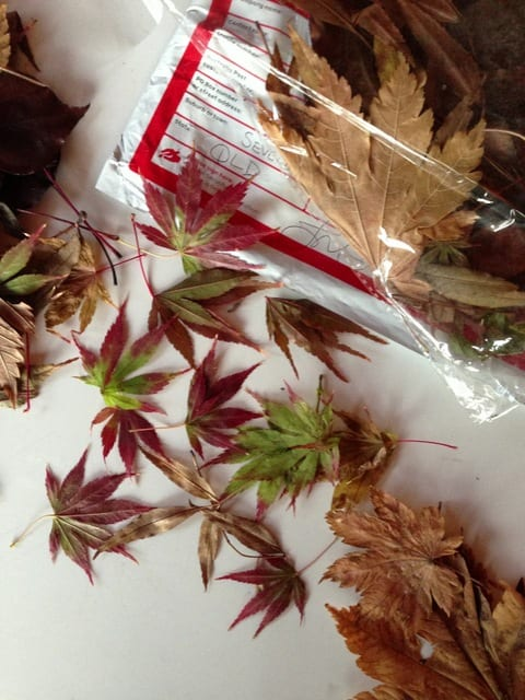 Autumn in a package.