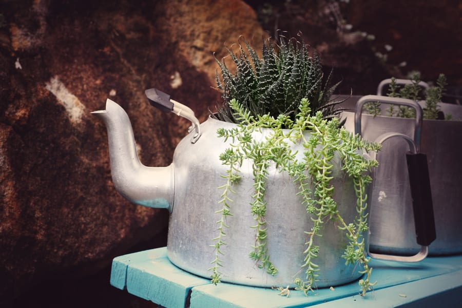 Upcycled Pots as Succulent Gardens