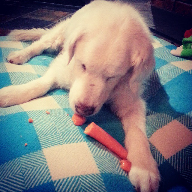 Chris eating carrot